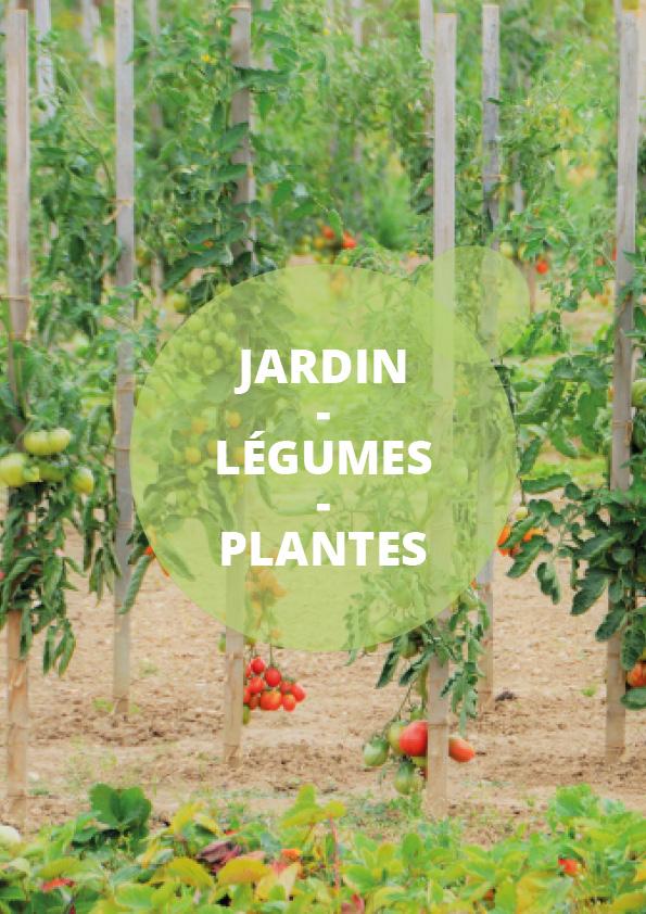 Catégorie Jardin Légumes Plantes