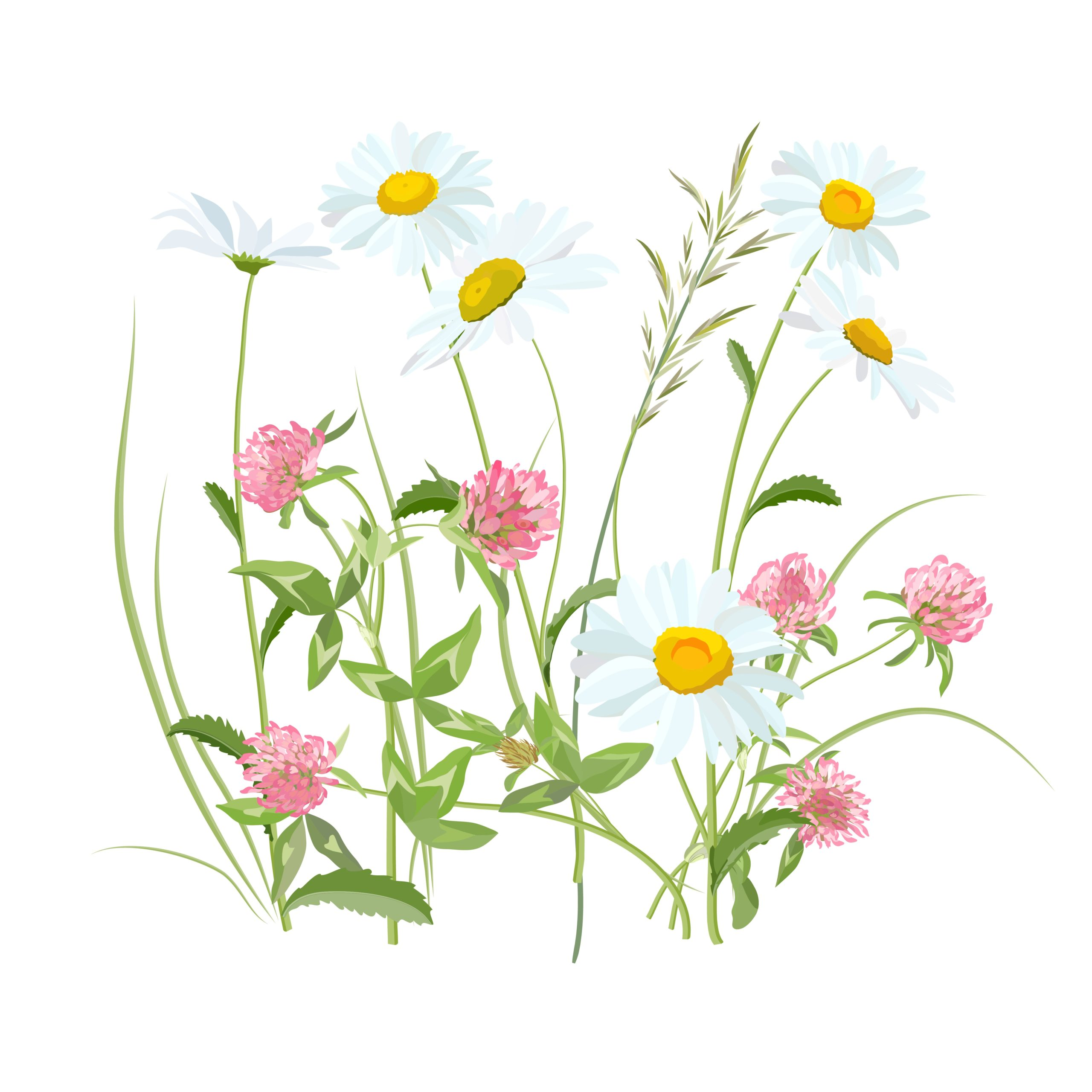 flowers-2082495